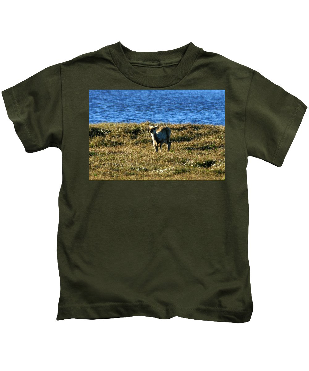 Fawn Kids T-Shirt featuring the photograph Caribou Fawn by Anthony Jones