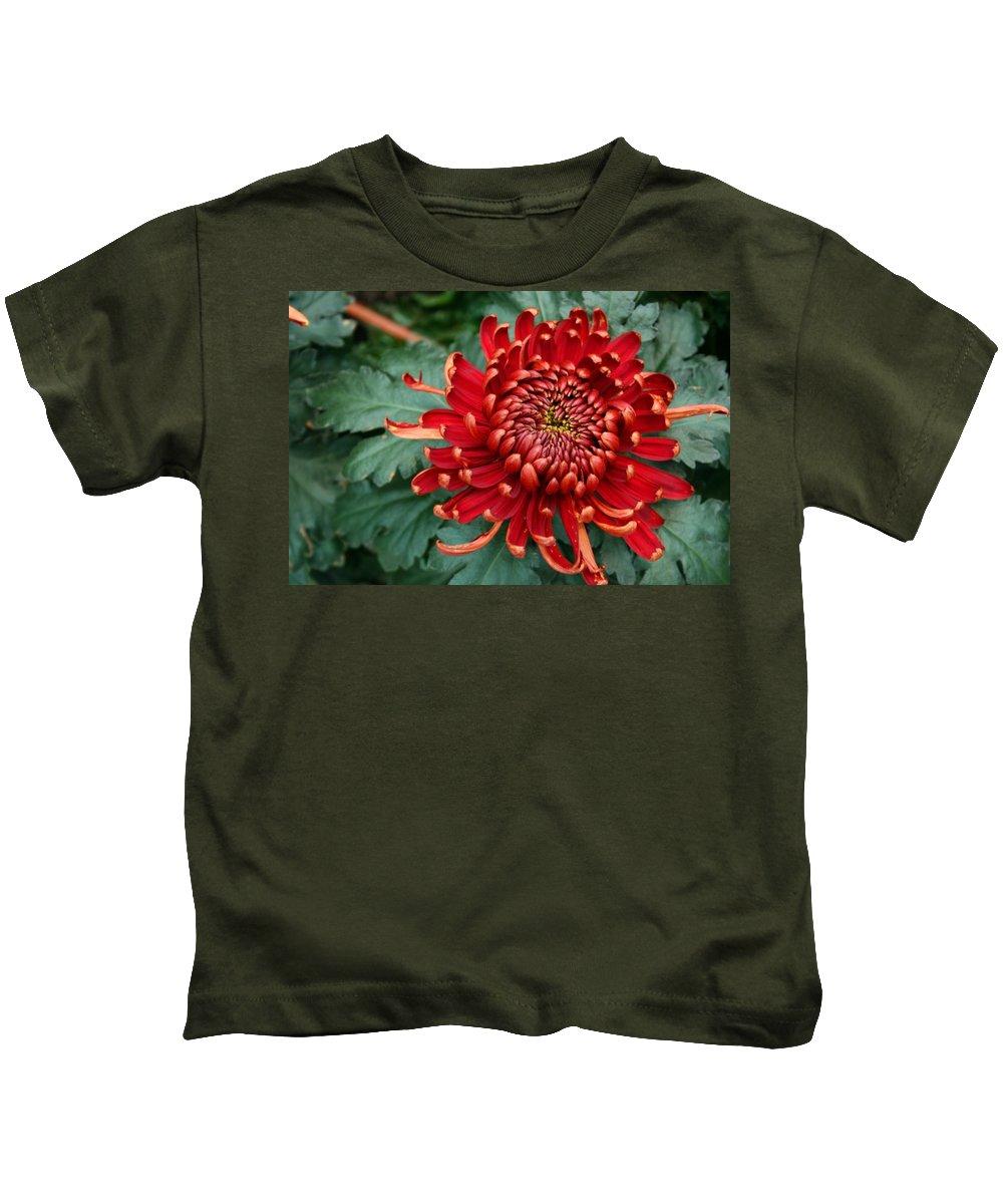 Plants Kids T-Shirt featuring the photograph Christmas Chrysanthemum by Angie Schutt