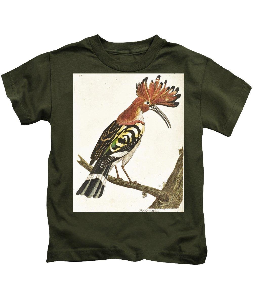 Eleazar Albin Kids T-Shirt featuring the drawing Cock Hoopoe by Eleazar Albin