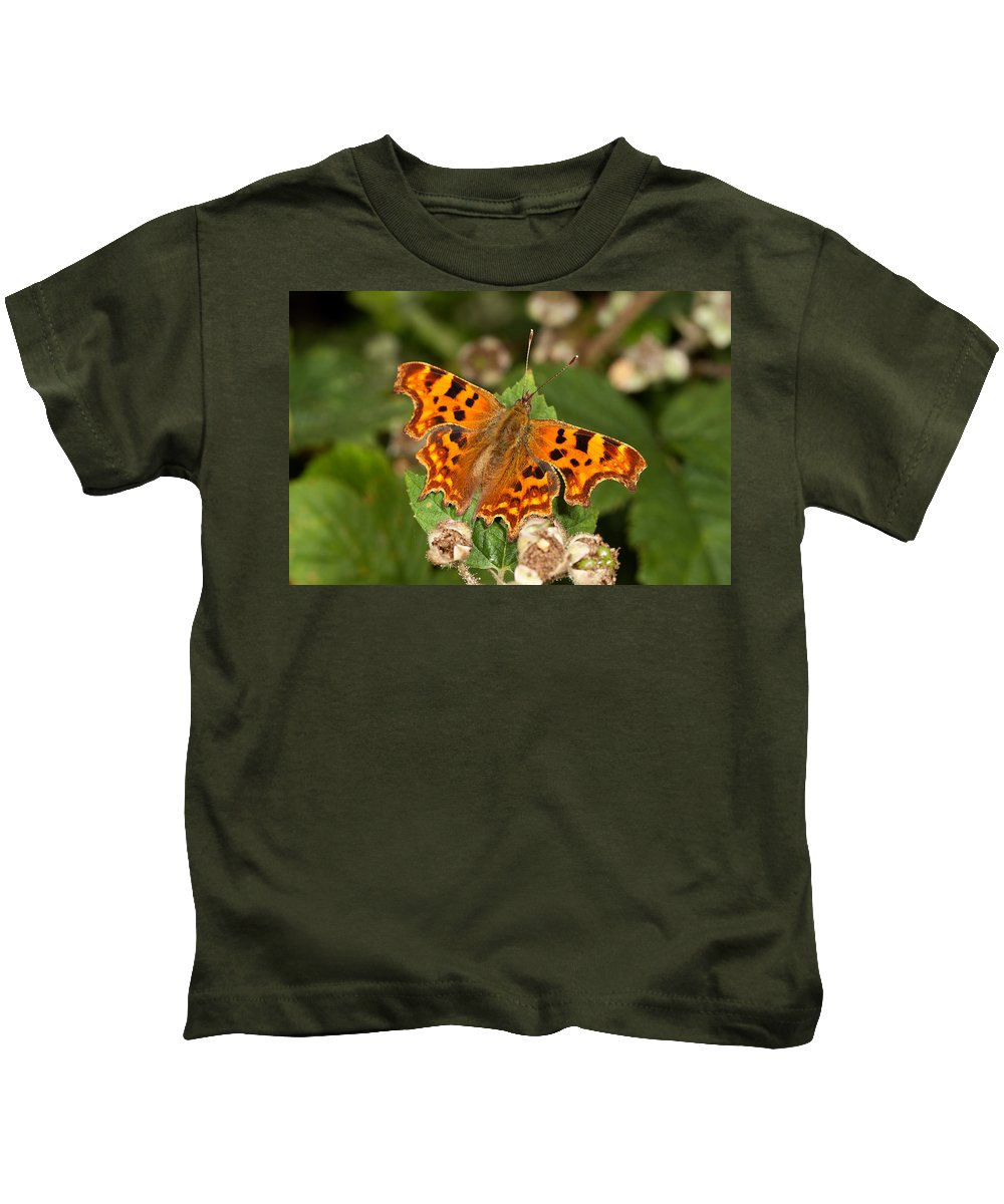 Comma Kids T-Shirt featuring the photograph Comma Butterfly by Bob Kemp