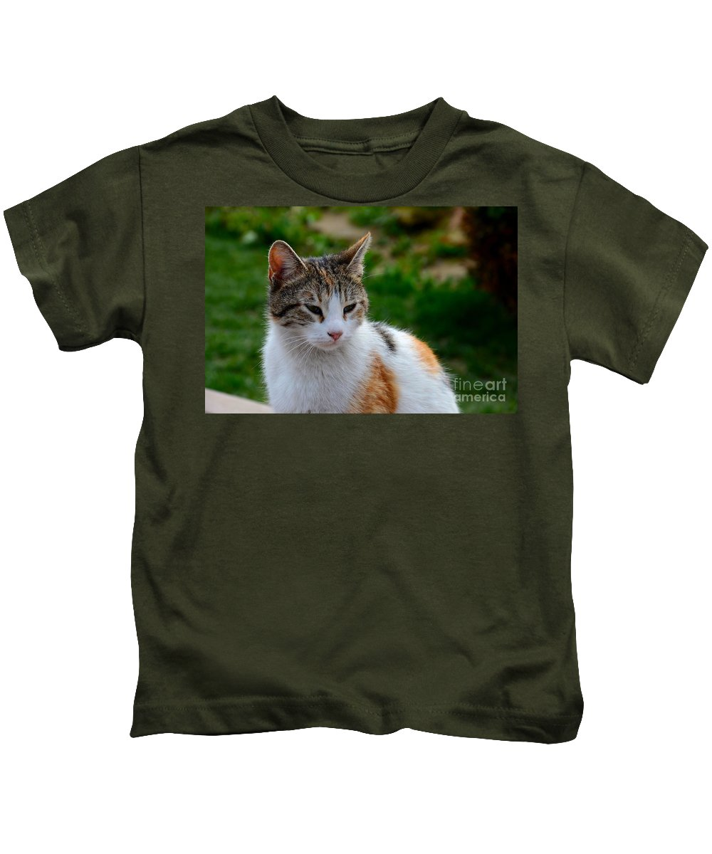 Cat Kids T-Shirt featuring the photograph Cute Grey White And Orange Cat Poses And Gazes by Imran Ahmed