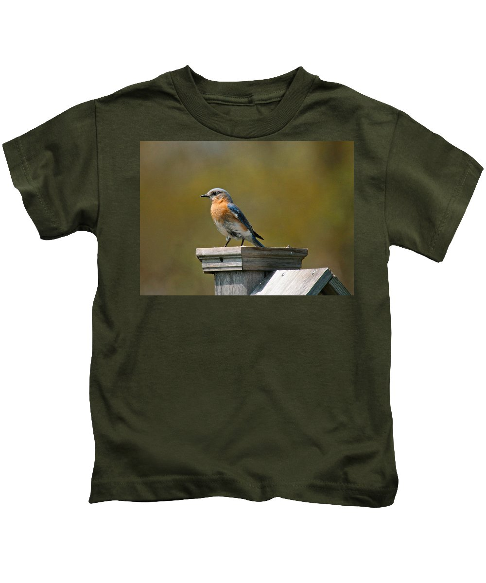 Blue Bird Kids T-Shirt featuring the photograph Eastern Blue Bird by Robert Pearson