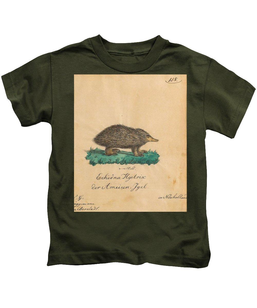 Art Kids T-Shirt featuring the painting Echidna Hystrixder Ameisen-igel The Spiny Echidna In Neuholland by Echidna Hystrixder
