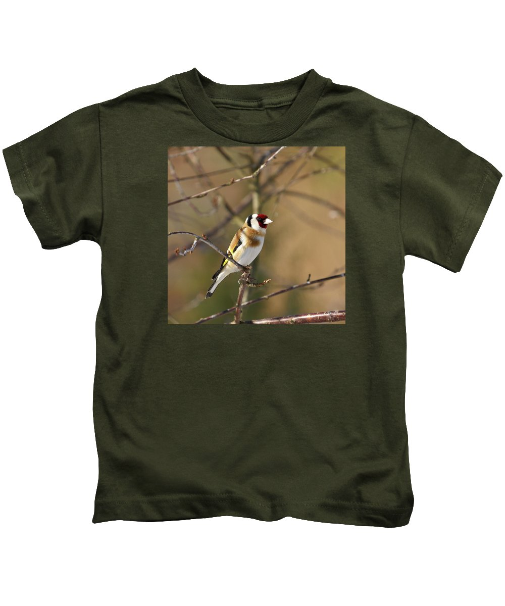 Lehtokukka Photography Kids T-Shirt featuring the photograph European Goldfinch 2 by Jouko Lehto