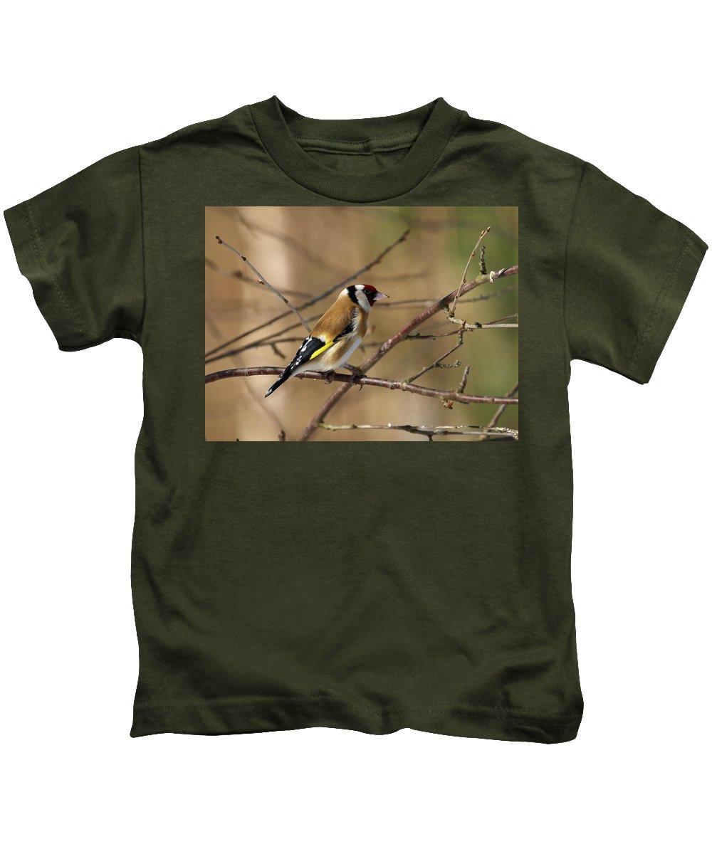 Lehtokukka Photography Kids T-Shirt featuring the photograph European Goldfinch 5 by Jouko Lehto