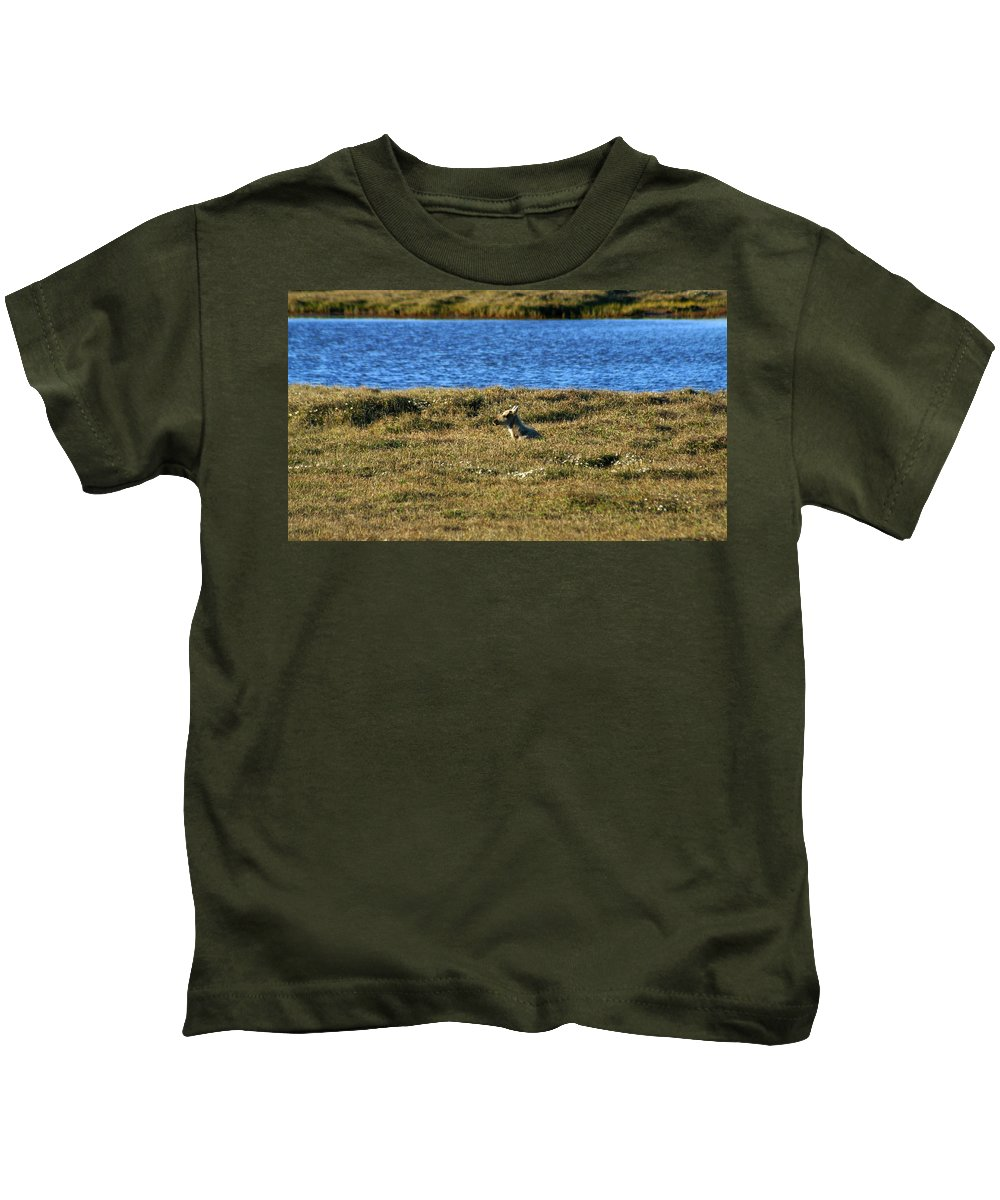 Caribou Kids T-Shirt featuring the photograph Fawn Caribou by Anthony Jones