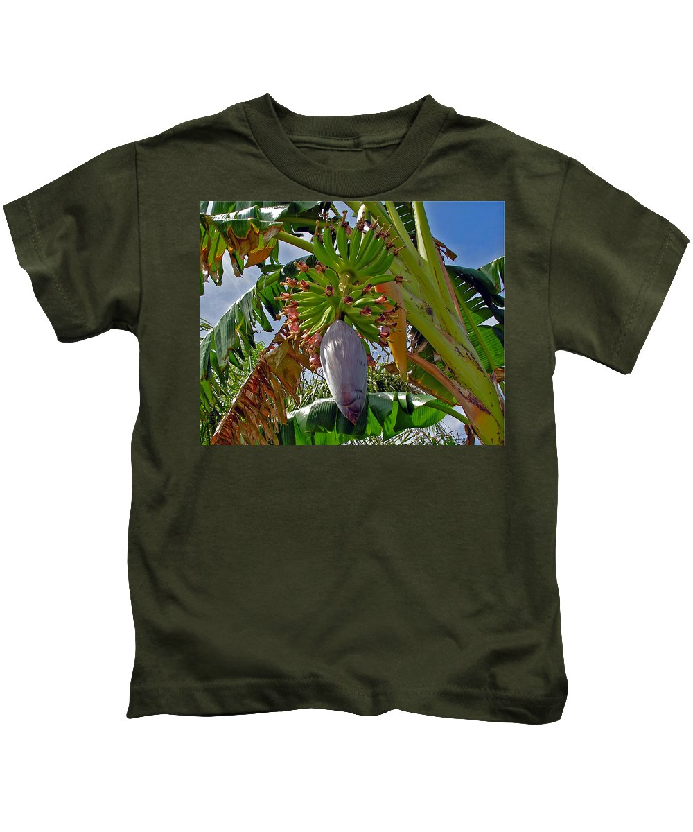 Banana; Bunch; Fruit; Flower; Tree; Stalk; Growing; Florida; Melbourne; Beach; Hand; Baby; Green; Le Kids T-Shirt featuring the photograph Florida Banana Flower And Fruit by Allan Hughes