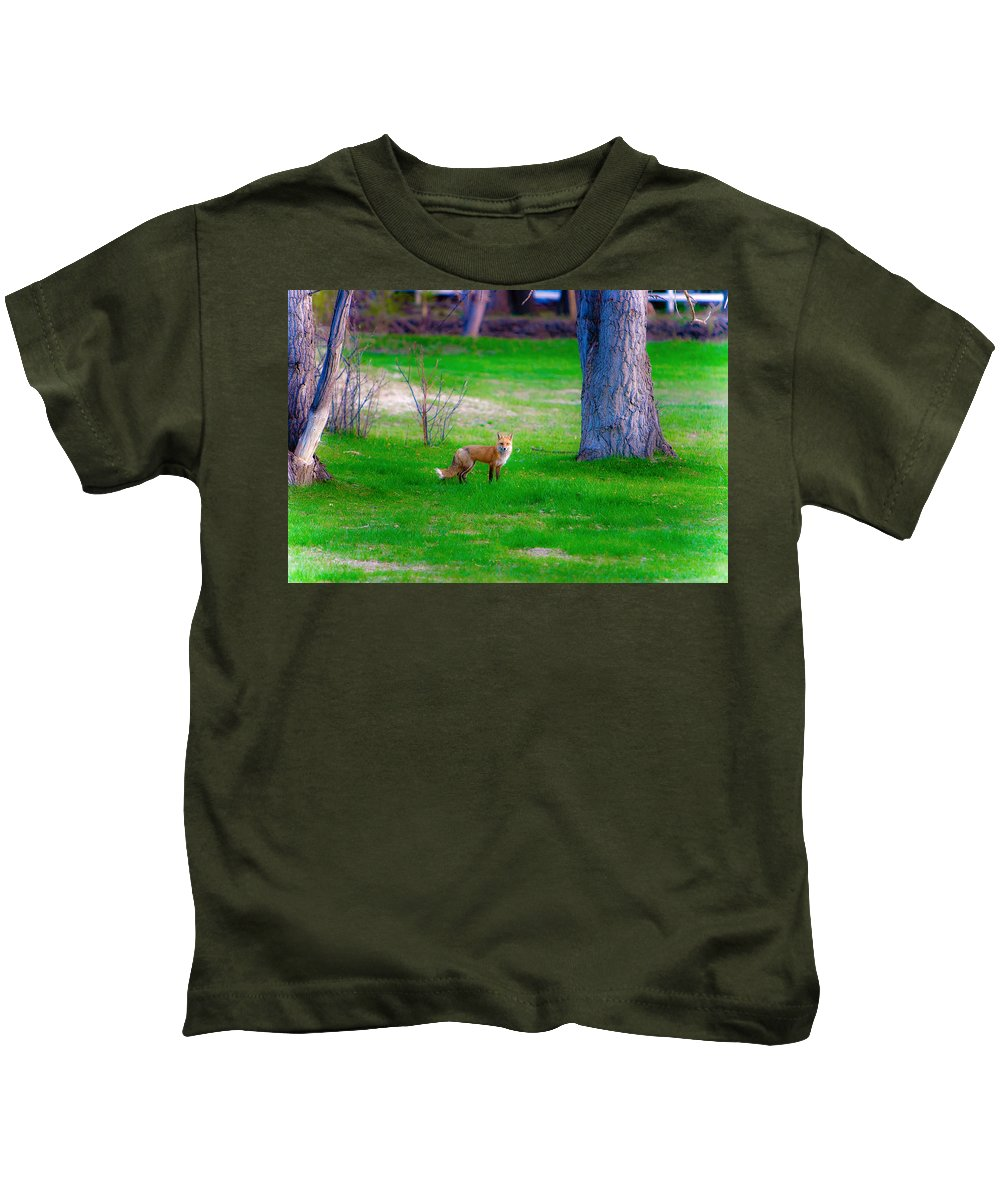 Fox Kids T-Shirt featuring the photograph Fox Of Boulder County by James BO Insogna