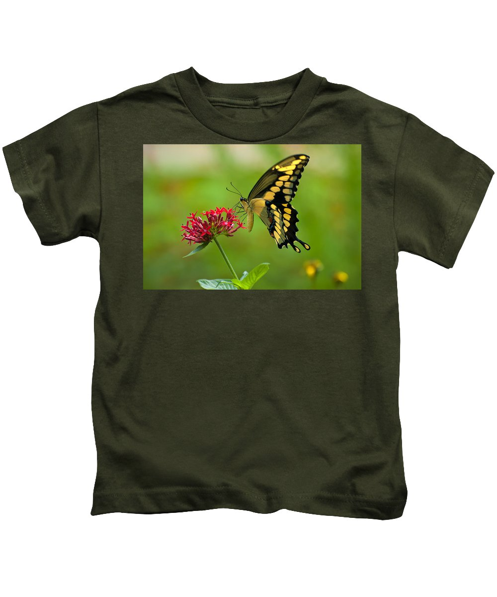 Giant Swallowtail Kids T-Shirt featuring the photograph Giant Swallowtail Butterfly by Rich Leighton