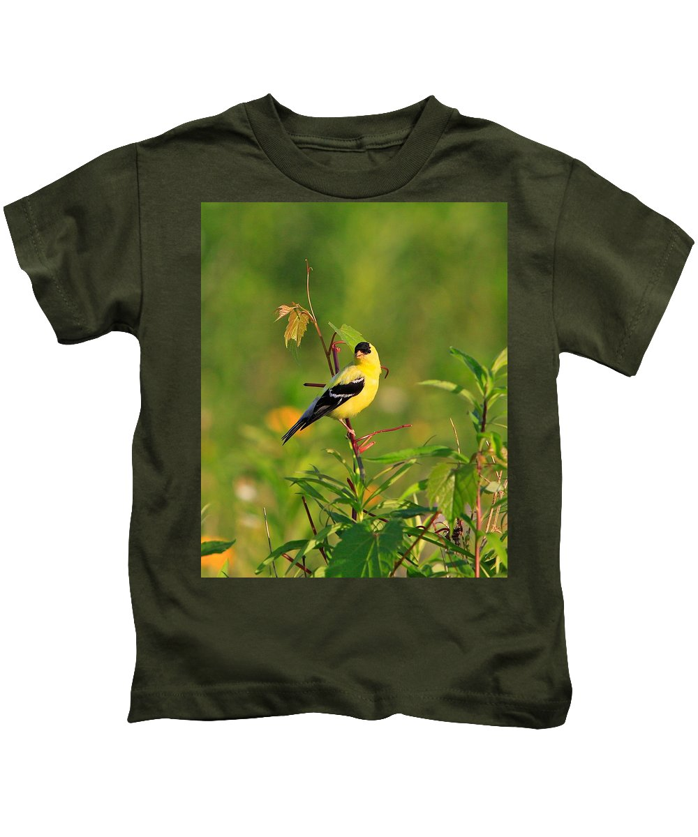 Gold Finch Kids T-Shirt featuring the photograph Gold Finches-2 by Robert Pearson