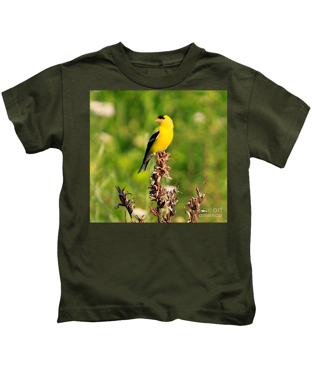 Gold Finch Kids T-Shirt featuring the photograph Gold Finches-4 by Robert Pearson