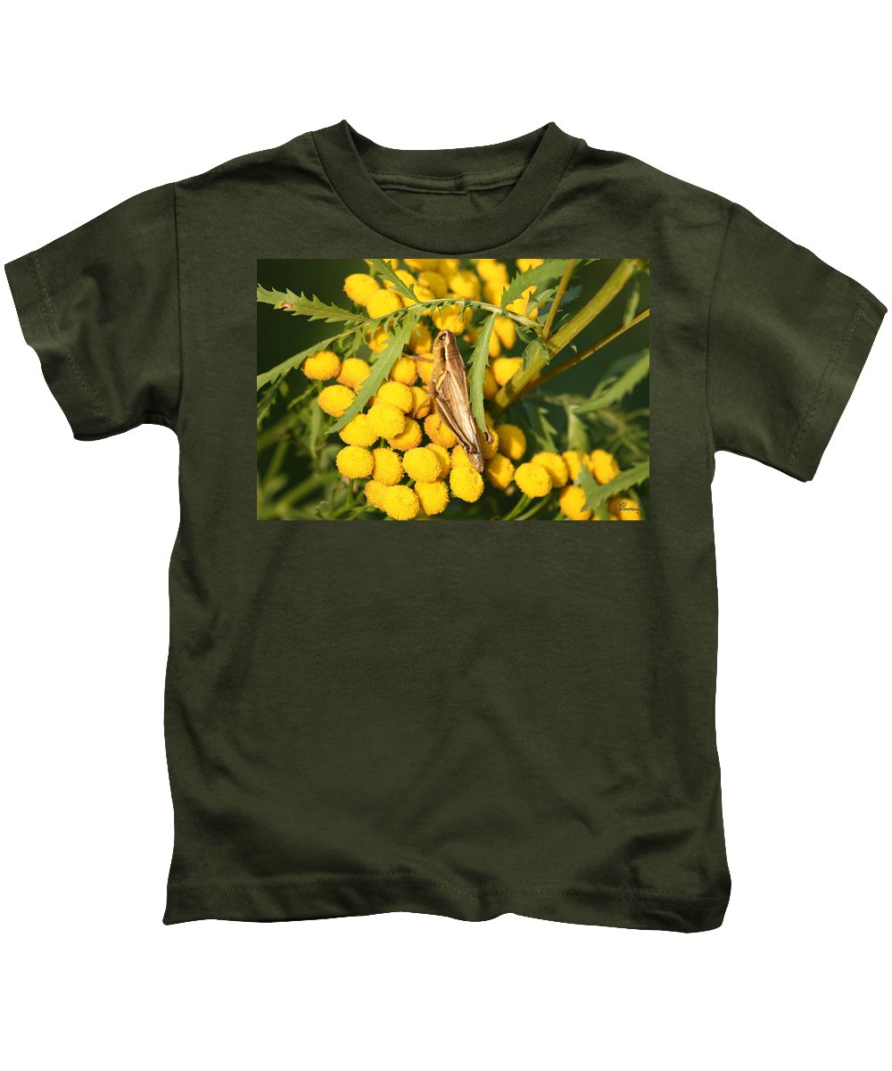 Bug Grasshopper Plants Flowers Nature Yellow Wild Life Green Weed Kids T-Shirt featuring the photograph Grasshopper by Andrea Lawrence