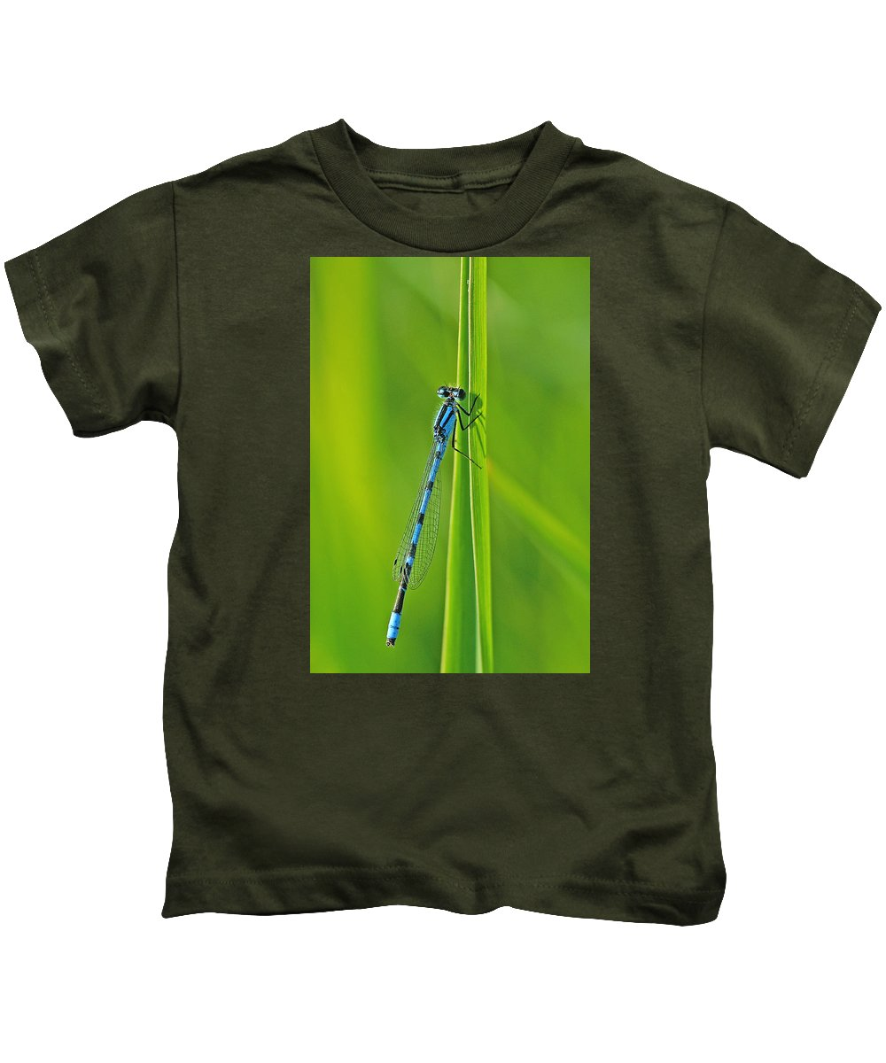 Damselfly Kids T-Shirt featuring the photograph Hagens Bluet by Bill Morgenstern