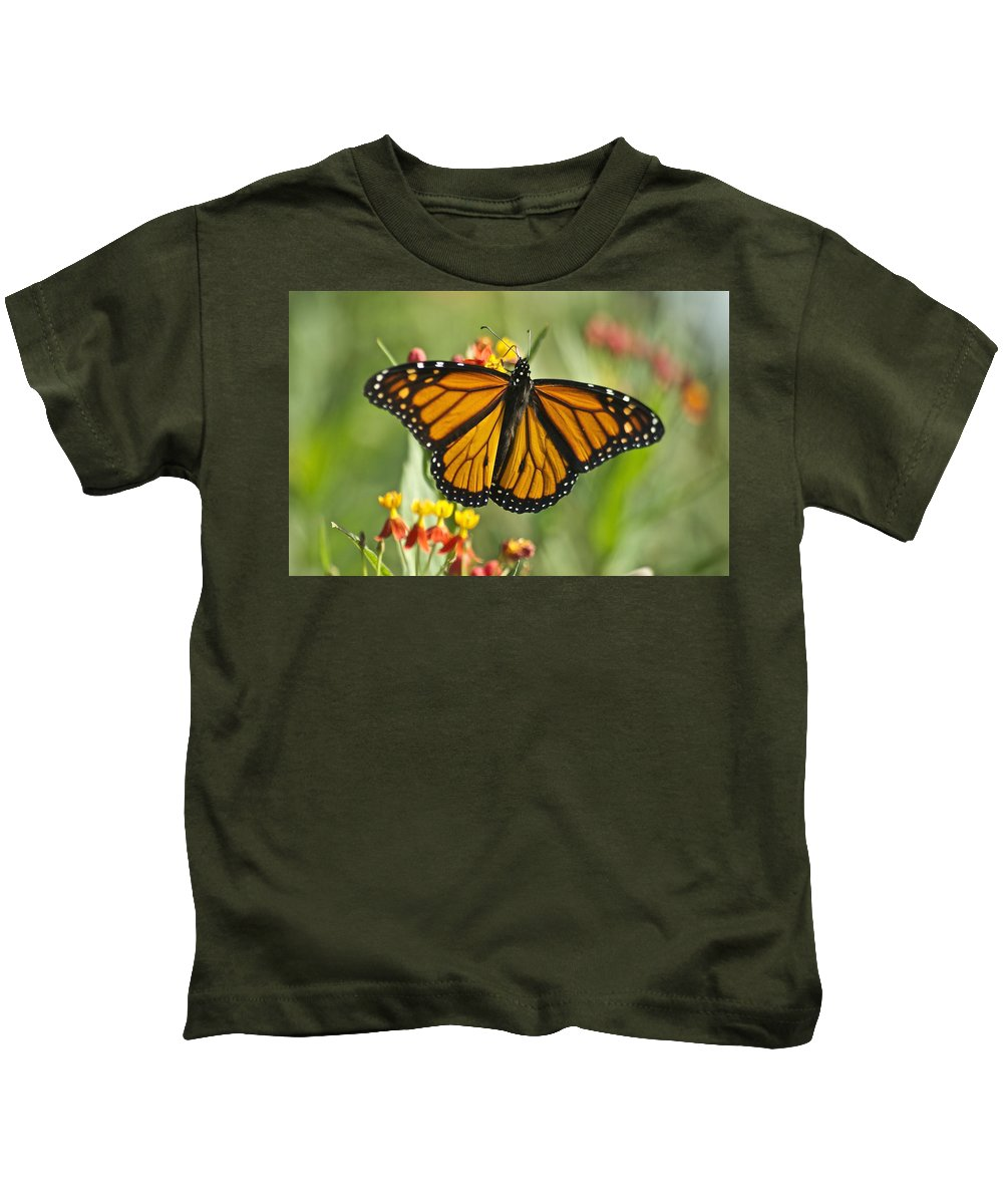 Wildlife Kids T-Shirt featuring the photograph Hawaiian Monarch 3 by Michael Peychich