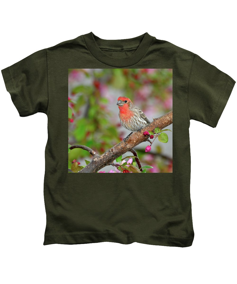 Finch Kids T-Shirt featuring the photograph House Finch by Betty LaRue