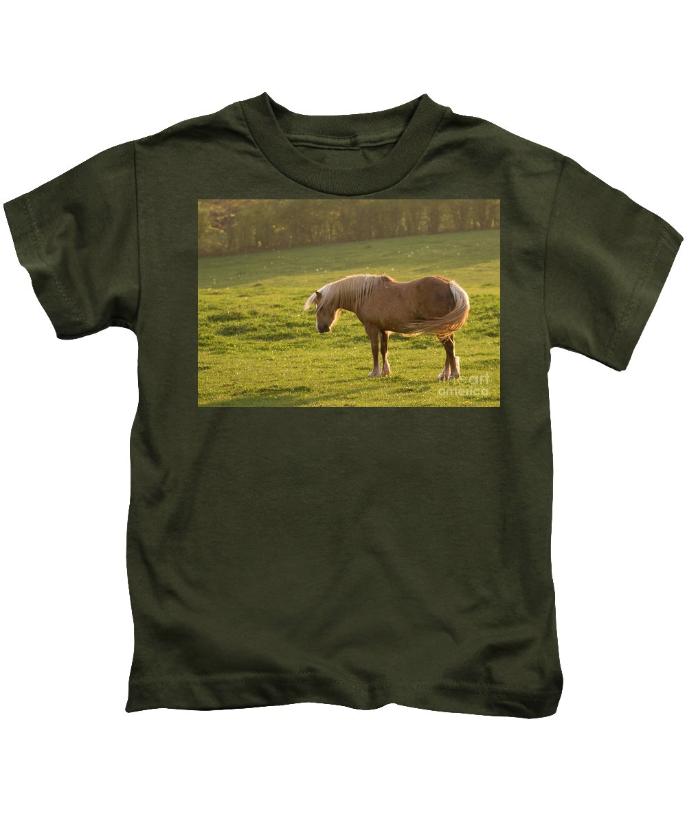 Horse Kids T-Shirt featuring the photograph In The Light Of The Evening Sun by Angel Ciesniarska