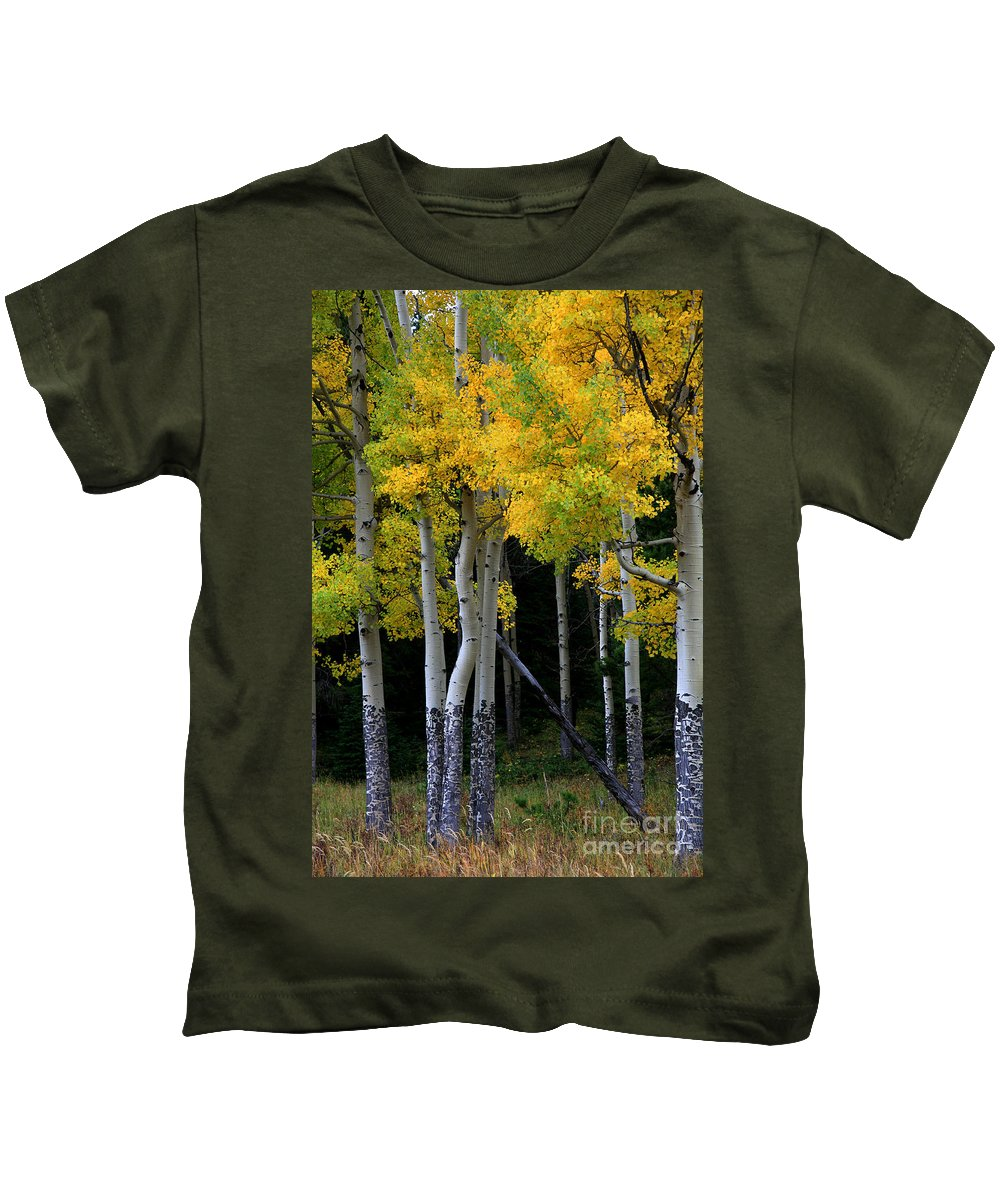 Aspens Kids T-Shirt featuring the photograph Leaning Aspen by Timothy Johnson