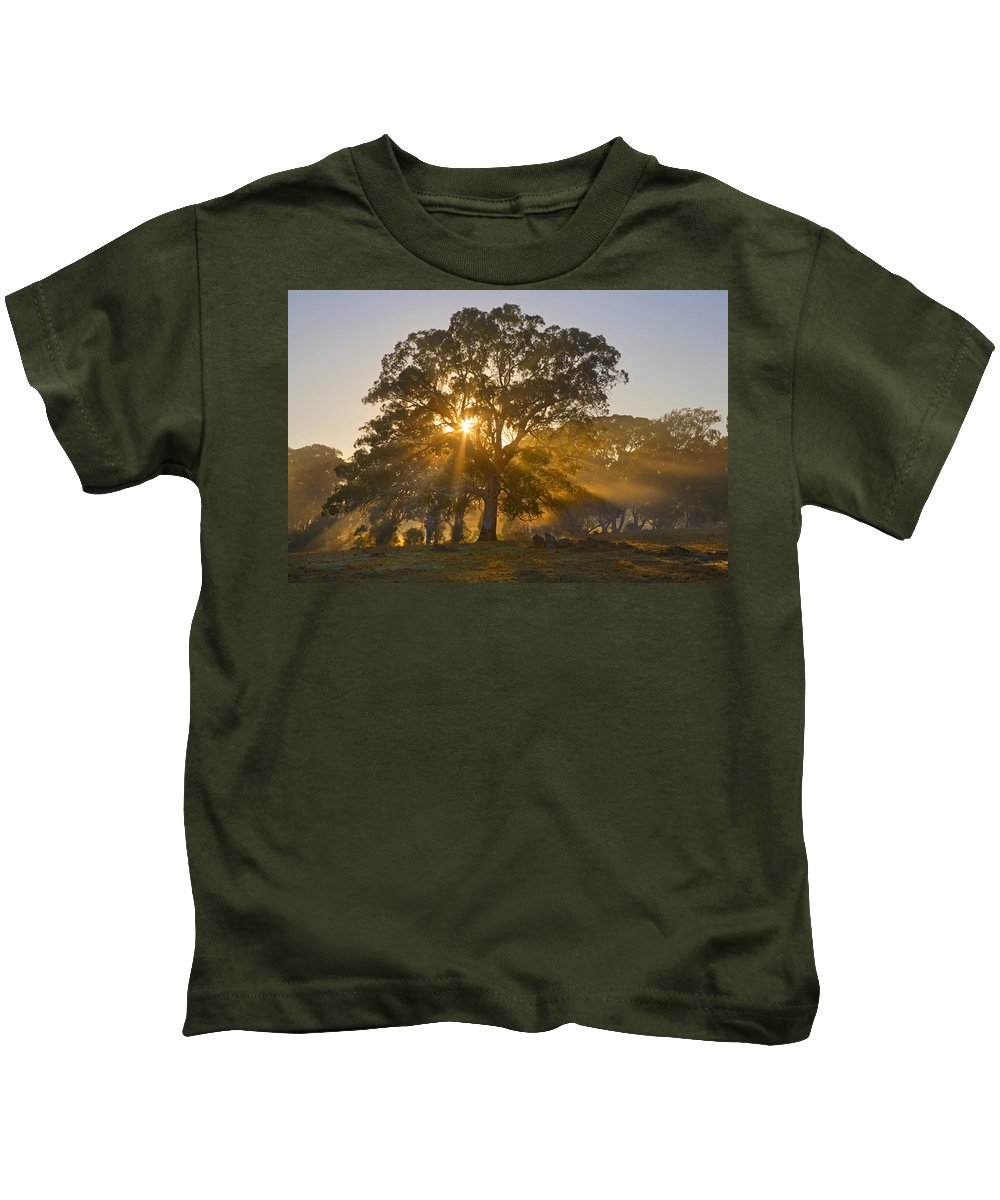 Tree Kids T-Shirt featuring the photograph Let There Be Light by Mike Dawson
