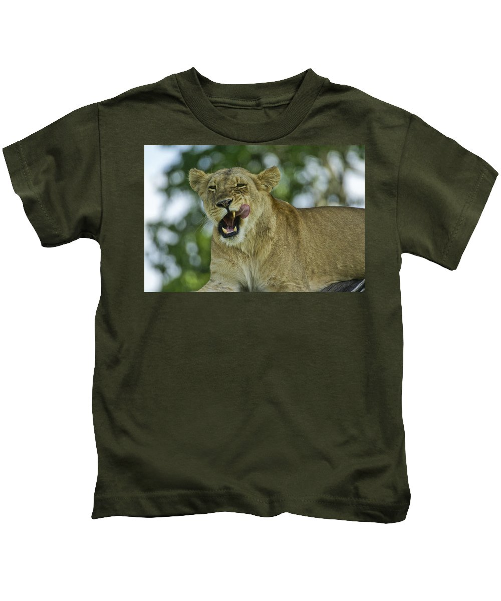 Africa Kids T-Shirt featuring the photograph Licking Lion by Michele Burgess