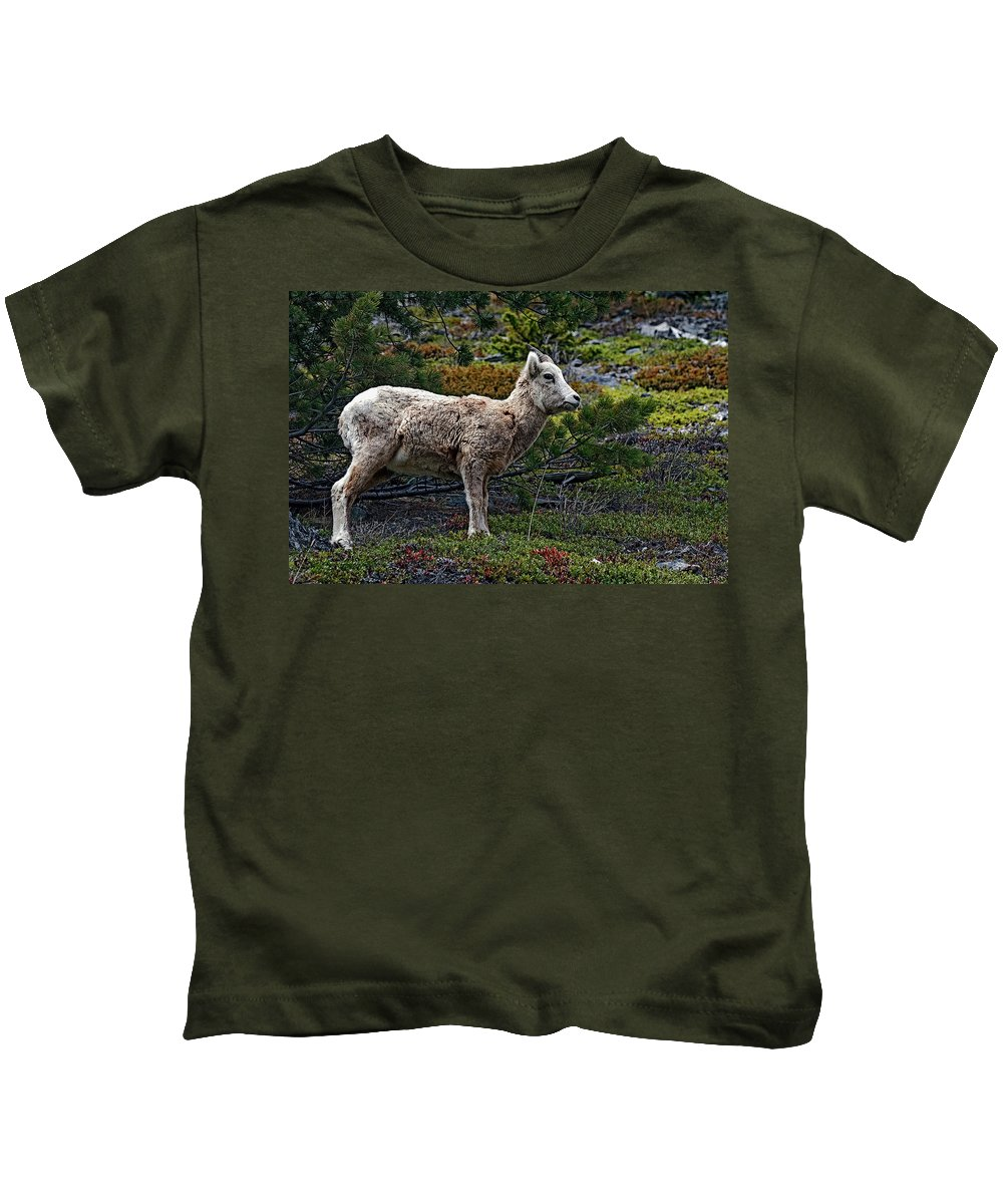 Sheep Kids T-Shirt featuring the photograph Litte Color by Eric Nelson
