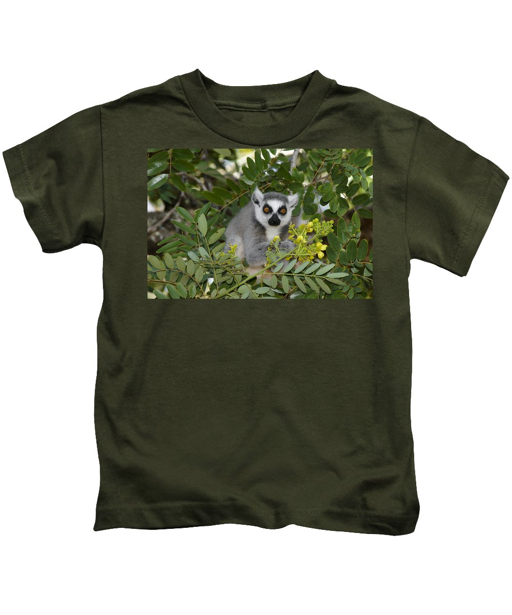 Madagascar Kids T-Shirt featuring the photograph Little Ring-tailed Lemur by Michele Burgess