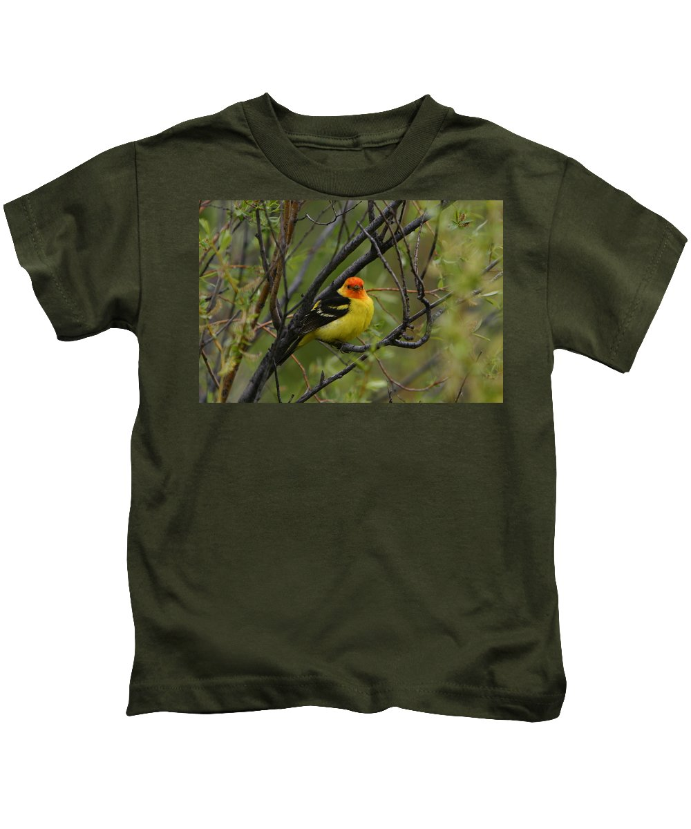 Bird Feathers Western Tanager Wildlife Orange Yellow Black Kids T-Shirt featuring the photograph Looking At You - Western Tanager by Shari Jardina