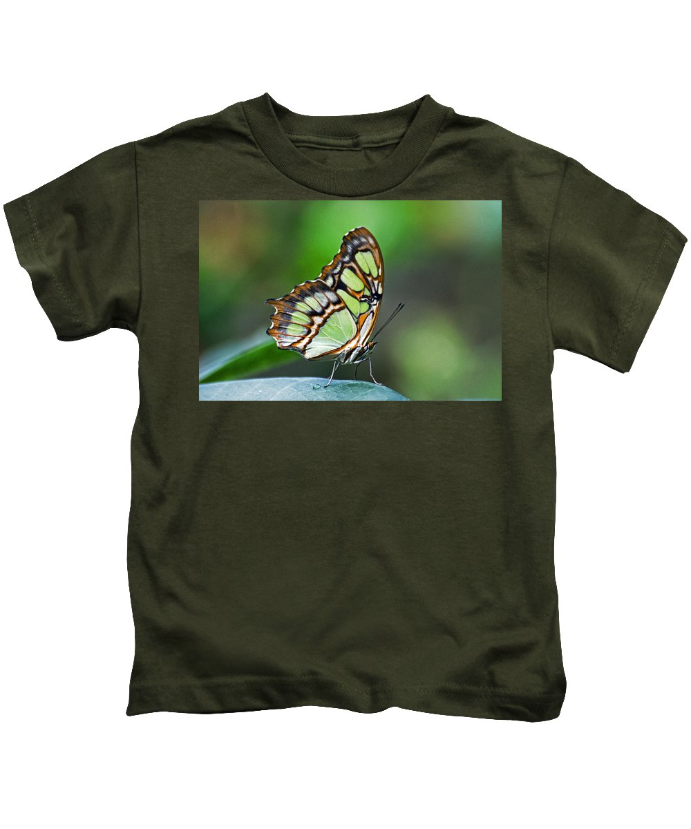 Malachite Butterfly Kids T-Shirt featuring the photograph Malachite Butterfly by Cheryl Cencich
