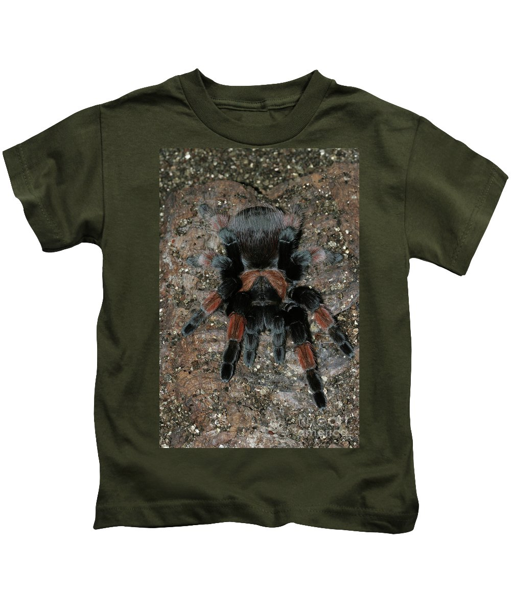 Spider Kids T-Shirt featuring the photograph Mexican Redleg Tarantula by Judy Whitton