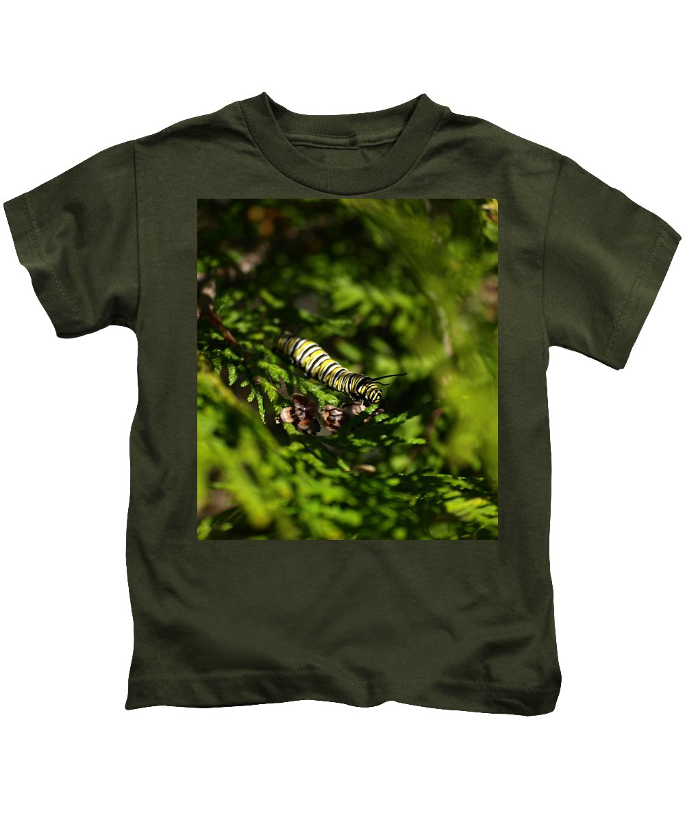 Nature Kids T-Shirt featuring the photograph Monarch Caterpillar by Denise Ashley