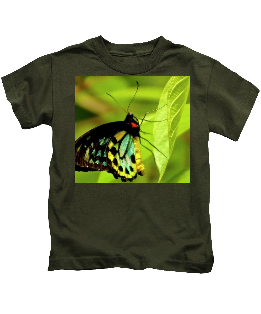 Kids T-Shirt featuring the photograph Multi Colored Buttrfly by Bill Jordan