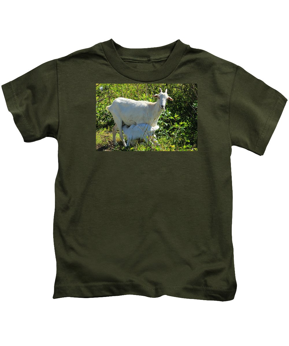 Nanny Goat Kids T-Shirt featuring the photograph Nanny And Kid Goat by Robert Hamm
