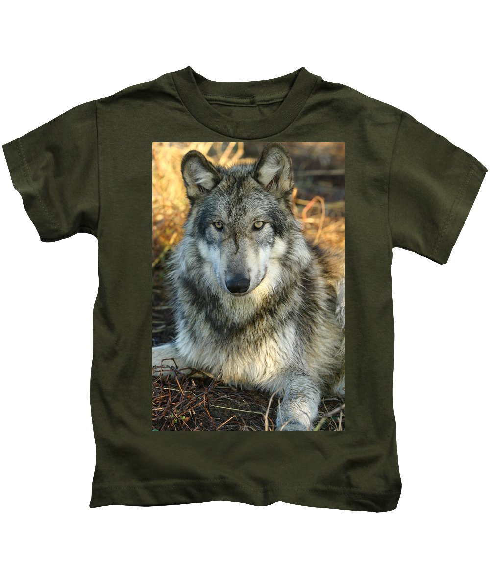 Wolf Lupine Canis Lupus Animal Wildlife Photography Photograph Kids T-Shirt featuring the photograph Noble Lupine by Shari Jardina