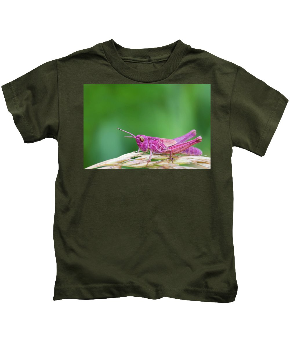 Animal Kids T-Shirt featuring the photograph Pink Grasshopper by Chris Smith
