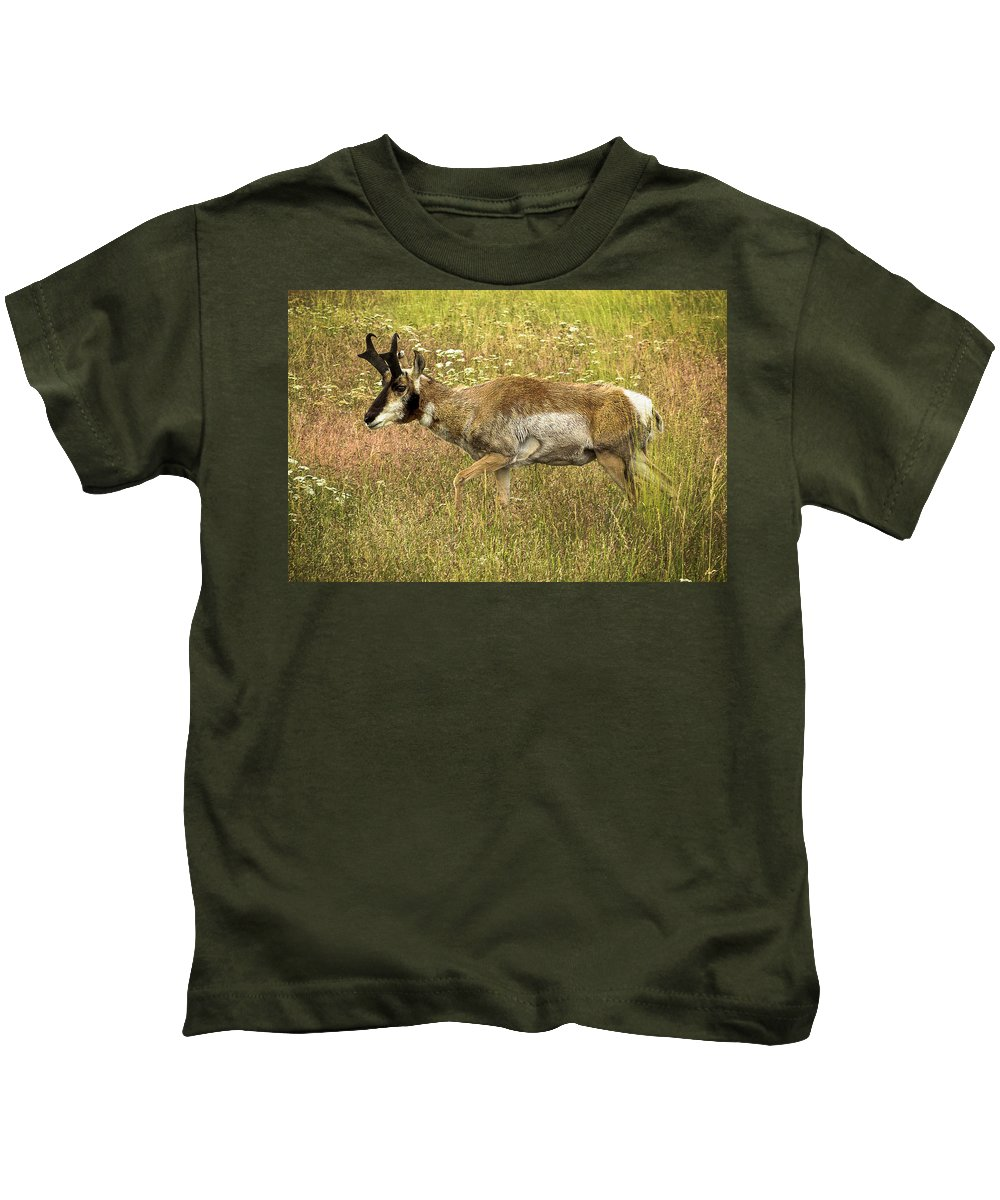 Pronghorn Antelope Kids T-Shirt featuring the photograph Pronghorn Antelope by Amy Sorvillo