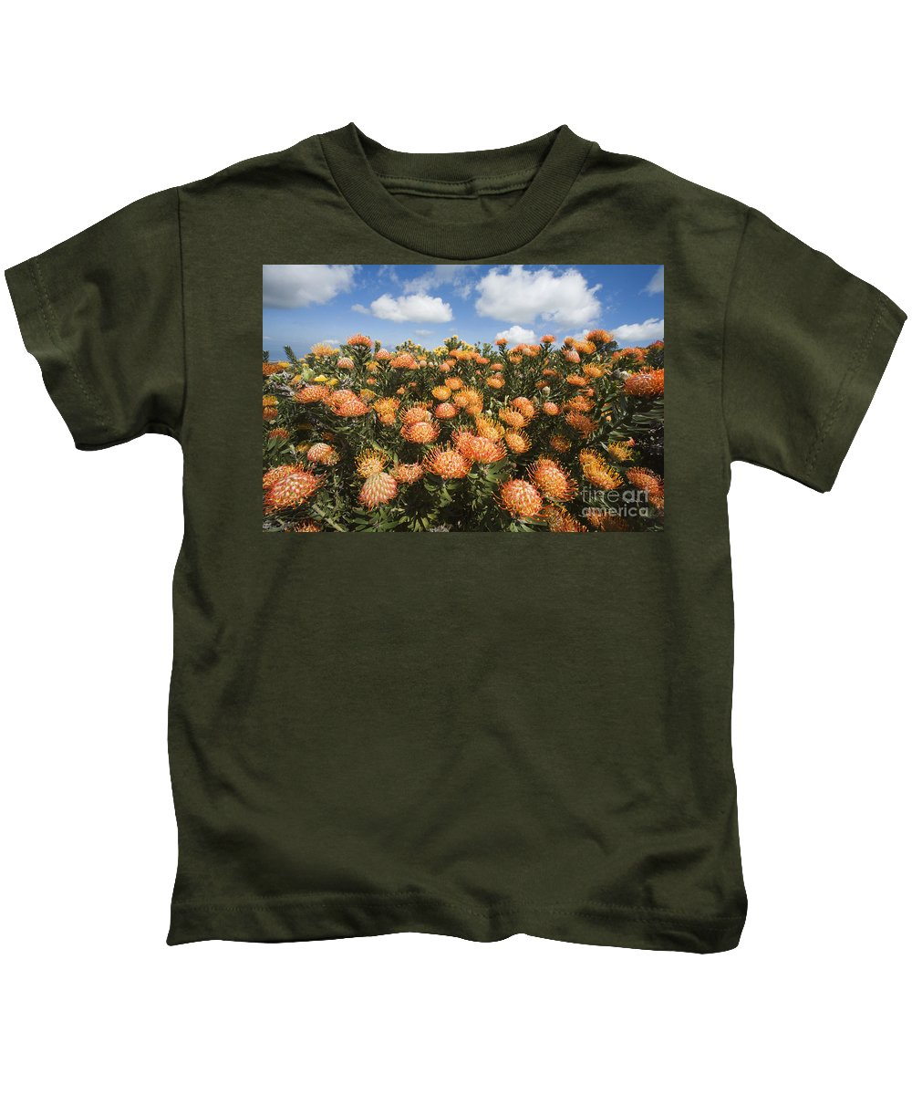 Afternoon Kids T-Shirt featuring the photograph Protea Blossoms by Ron Dahlquist - Printscapes