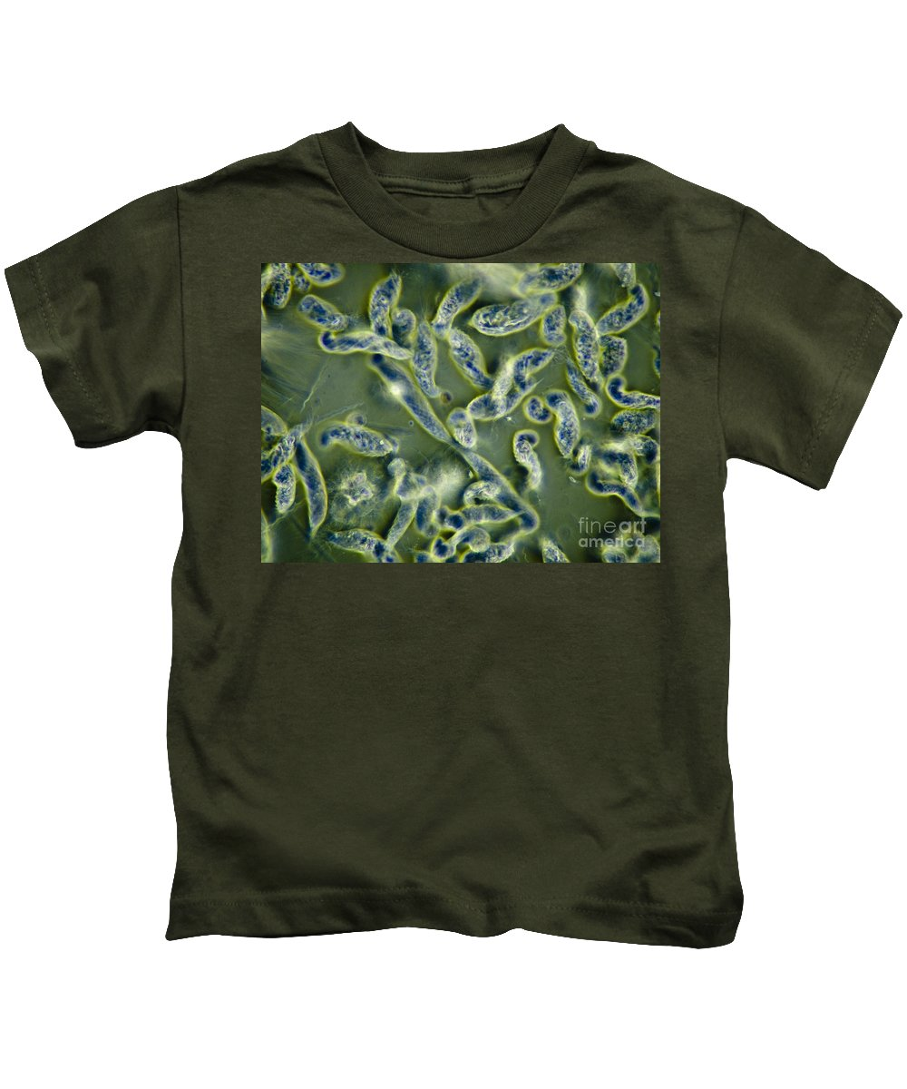 Science Kids T-Shirt featuring the photograph Protozoa Symbiont Of Termites, Lm by Rub�n Duro/BioMEDIA ASSOCIATES LLC
