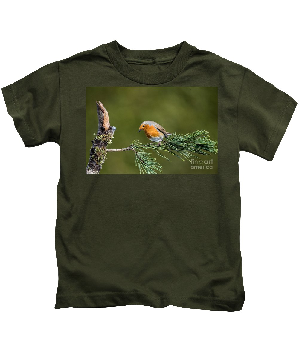 Robin . Birds. Tree. Branch Red. Kids T-Shirt featuring the photograph Robin In The Garden by Bill G Smith