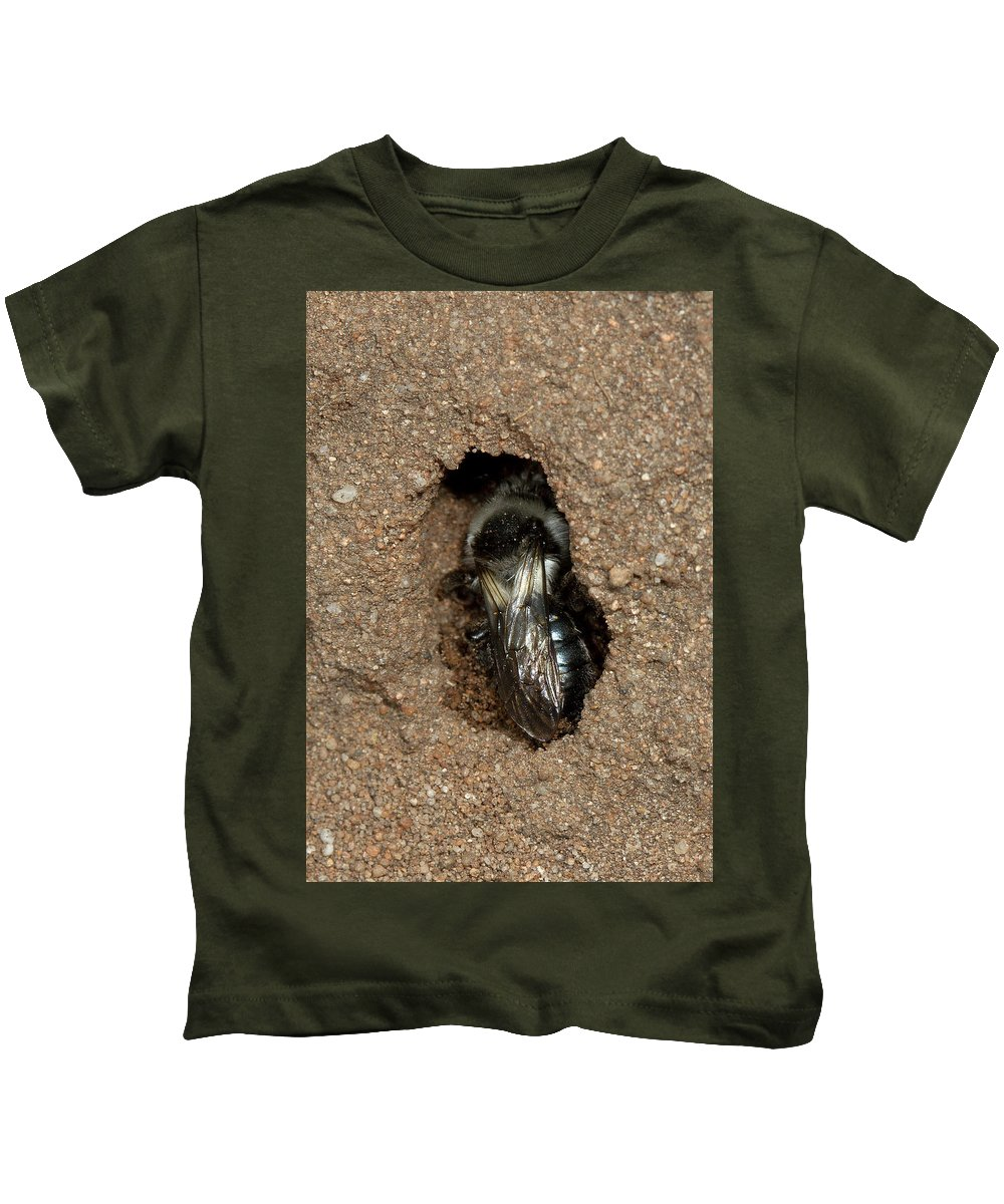 Solitary Bee Kids T-Shirt featuring the photograph Solitary Bee Andrena Cinearia by Bob Kemp