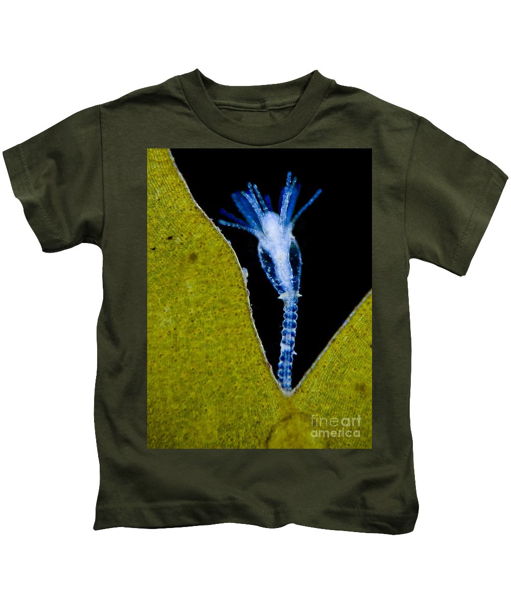 Science Kids T-Shirt featuring the photograph Thecate Hydrozoan Clytia Sp., Lm by Rub�n Duro/BioMEDIA ASSOCIATES LLC