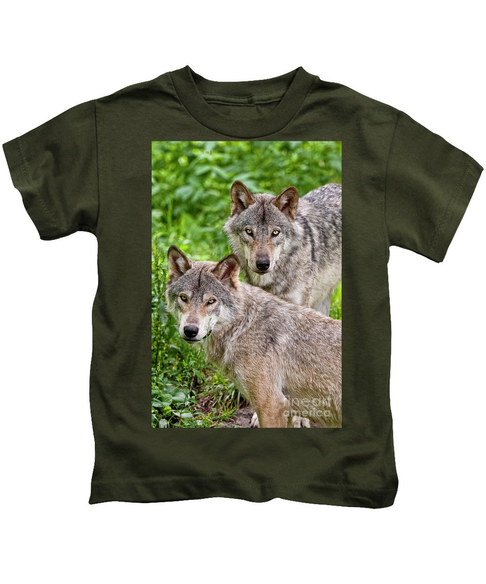 Michael Cummings Kids T-Shirt featuring the photograph Timber Wolf Pair by Michael Cummings