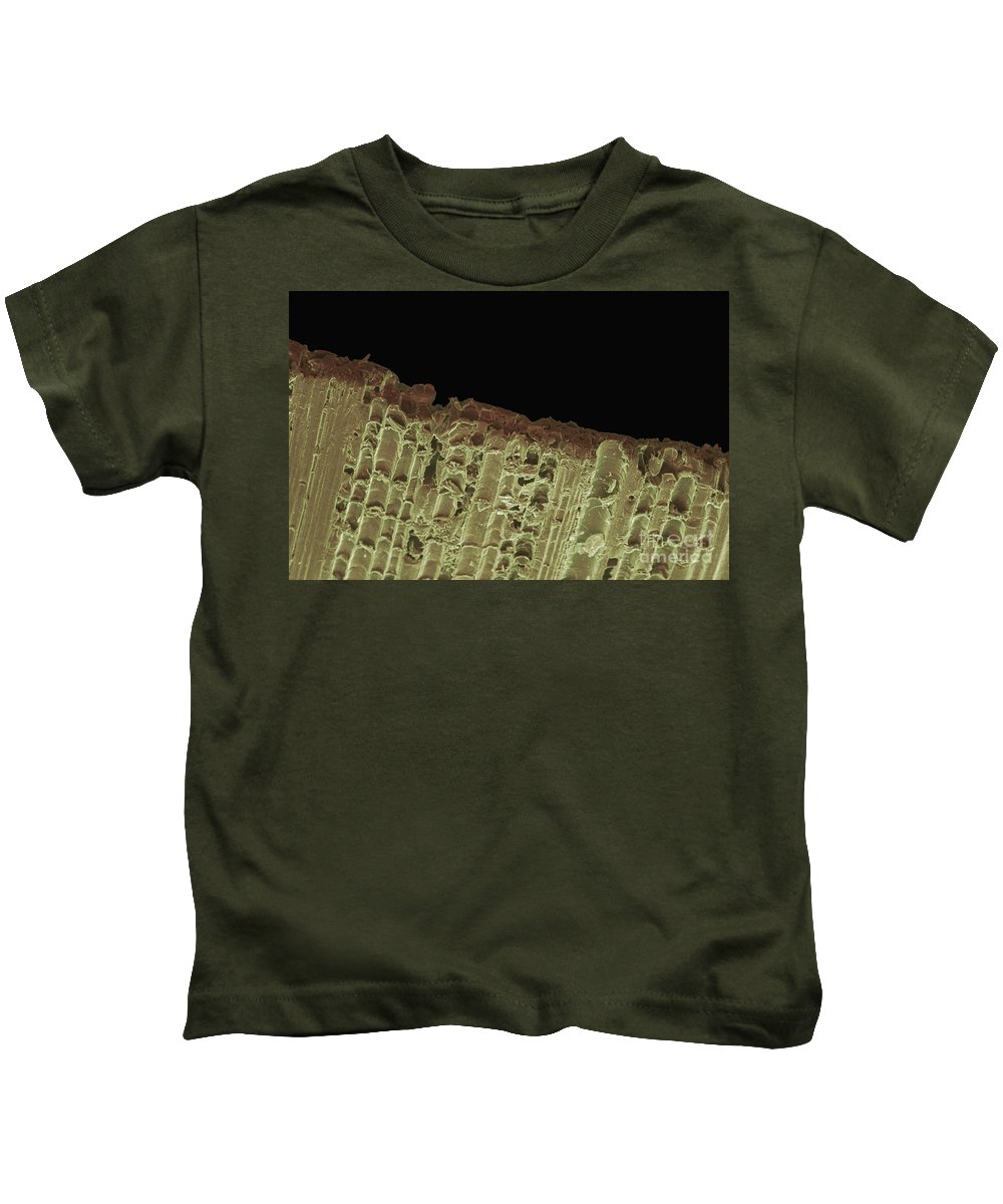 Sem Kids T-Shirt featuring the photograph Woodwind Reed, Sem by Ted Kinsman