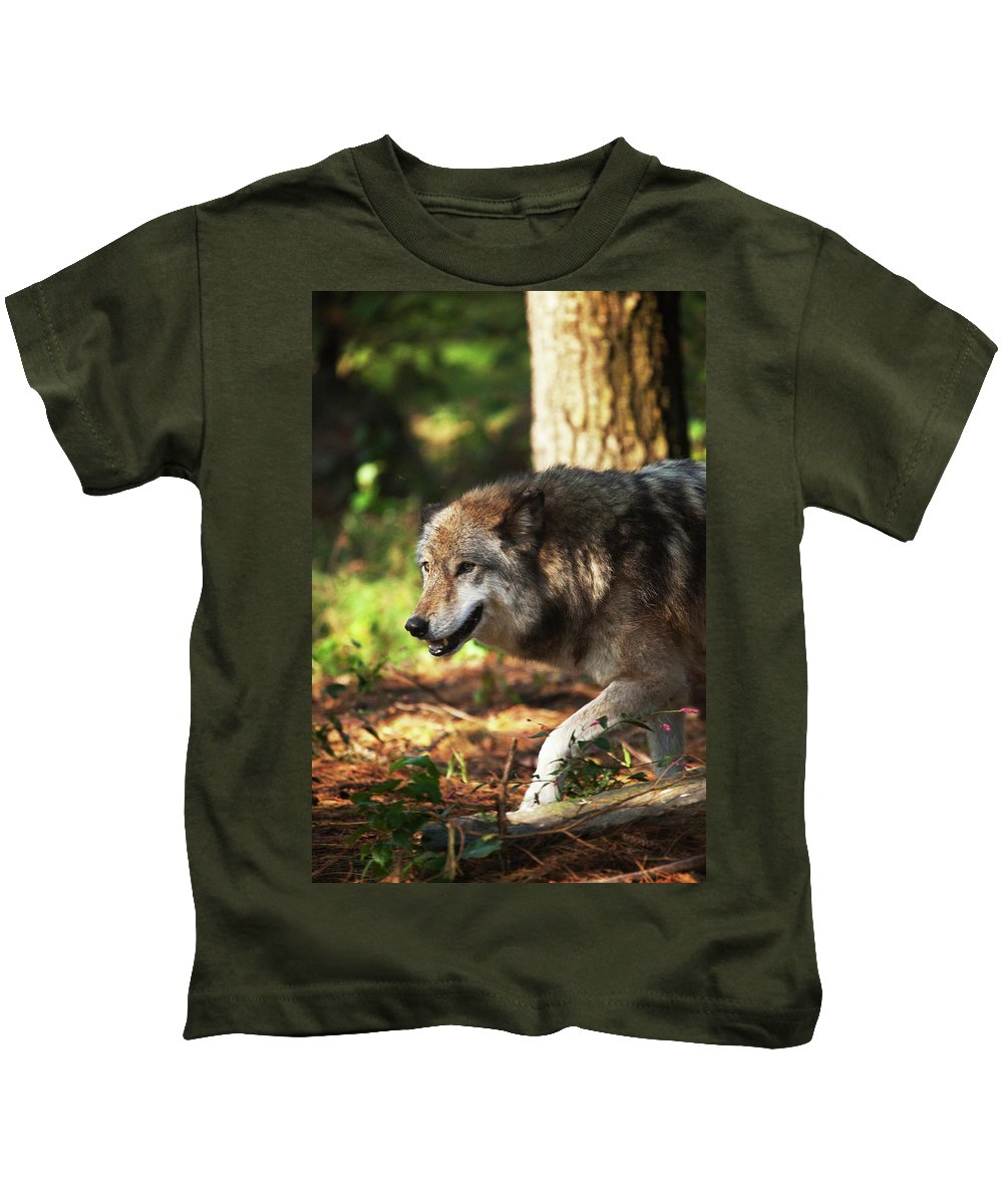 Wolf Kids T-Shirt featuring the photograph The Gray Wolf by Karol Livote
