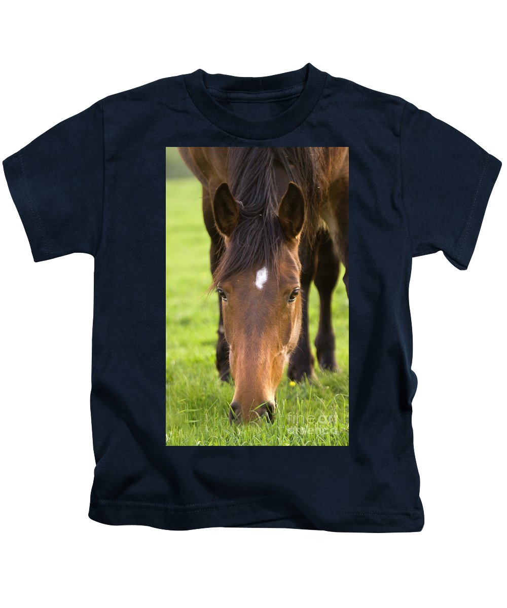 Horse Kids T-Shirt featuring the photograph Having A Lunch by Angel Ciesniarska