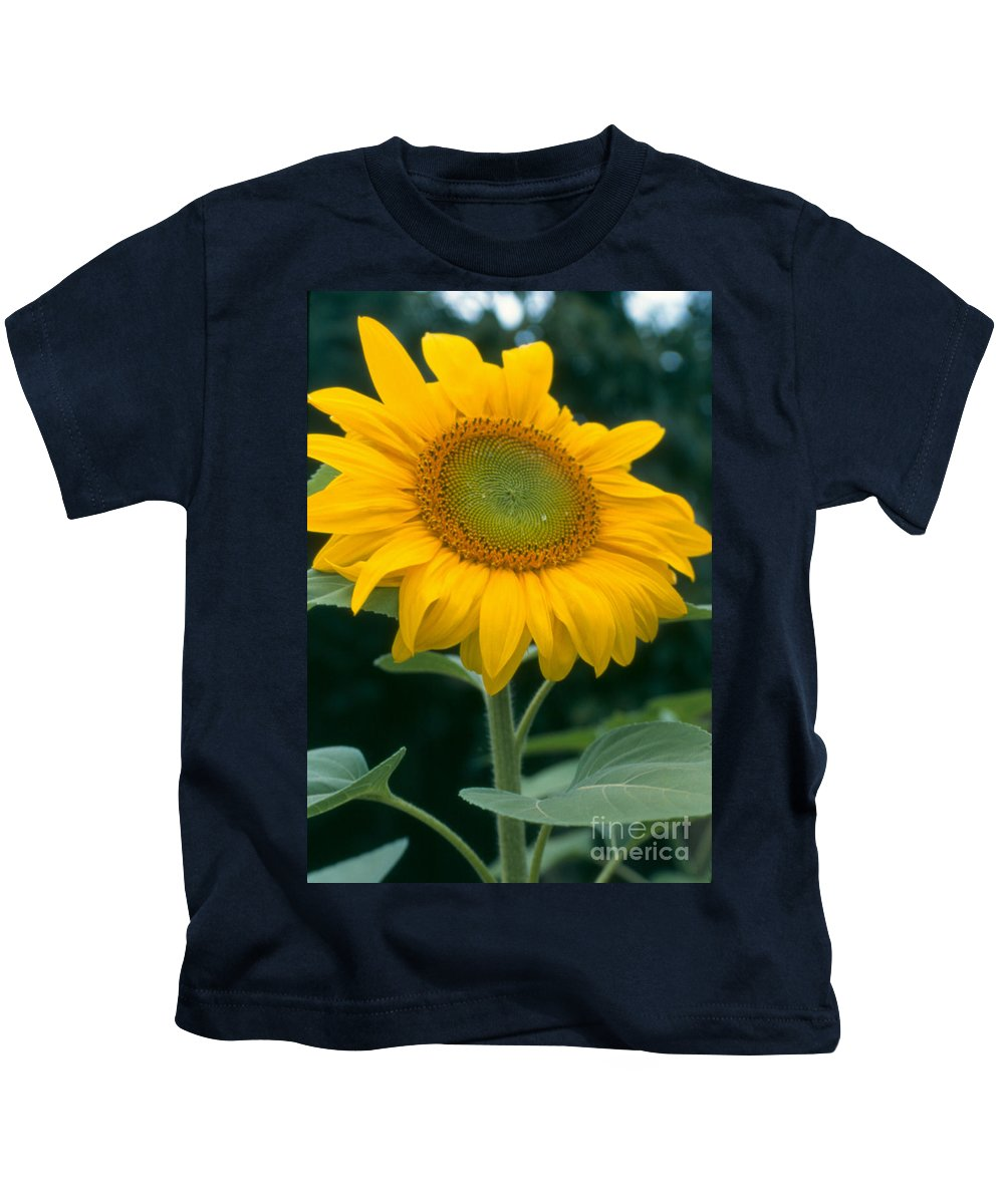 Flower Kids T-Shirt featuring the photograph Sunflower In Seattle by Heather Kirk