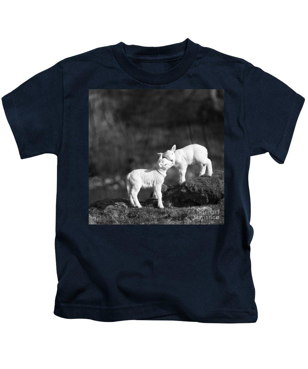 Sheep Kids T-Shirt featuring the photograph Sweet Little Lambs by Angel Ciesniarska
