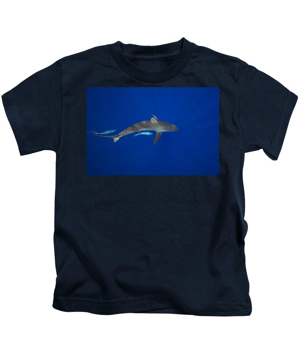 Abundance Kids T-Shirt featuring the photograph Silky Shark by Dave Fleetham - Printscapes