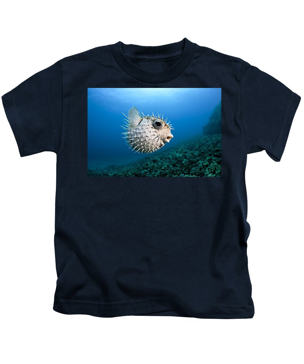 Blow Kids T-Shirt featuring the photograph Spotted Porcupinefish by Dave Fleetham
