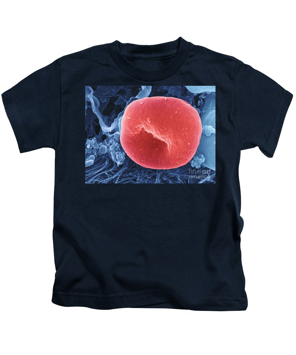 Science Kids T-Shirt featuring the photograph Human Red Blood Cell, Sem by Ted Kinsman