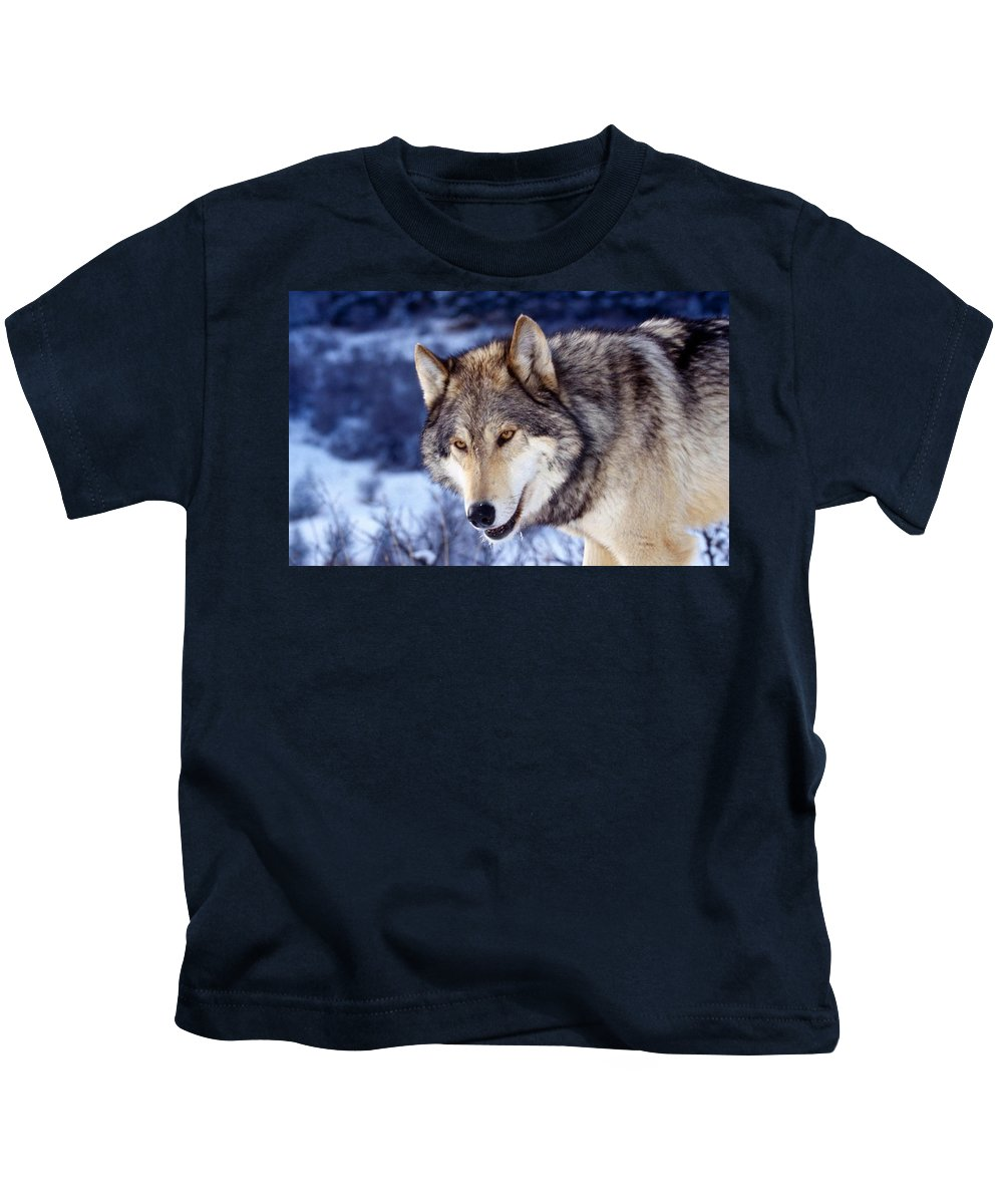 Gray Wolf Kids T-Shirt featuring the digital art Gray Wolf by Dorothy Binder