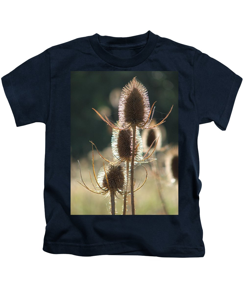 Teasle Kids T-Shirt featuring the photograph Teasle In Morning Light by Bob Kemp